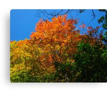 Coloured mountainous leaves Canvas Print