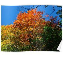 Coloured mountainous leaves Poster