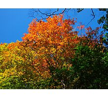 Coloured mountainous leaves Photographic Print
