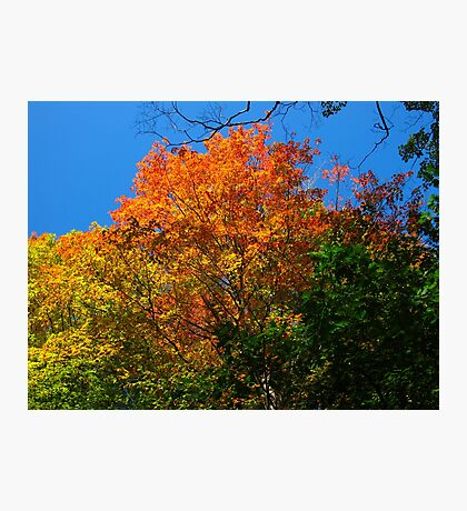 Coloured mountainous leaves Photographic Print
