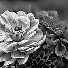 Dahlias by Eunice Gibb