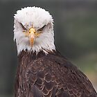 Bald Eagle by Eunice Gibb