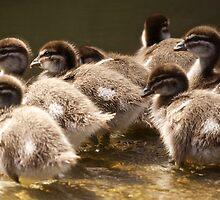 Ducklings by D-GaP