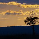 Late afternoon, Serengeti by Neville Jones