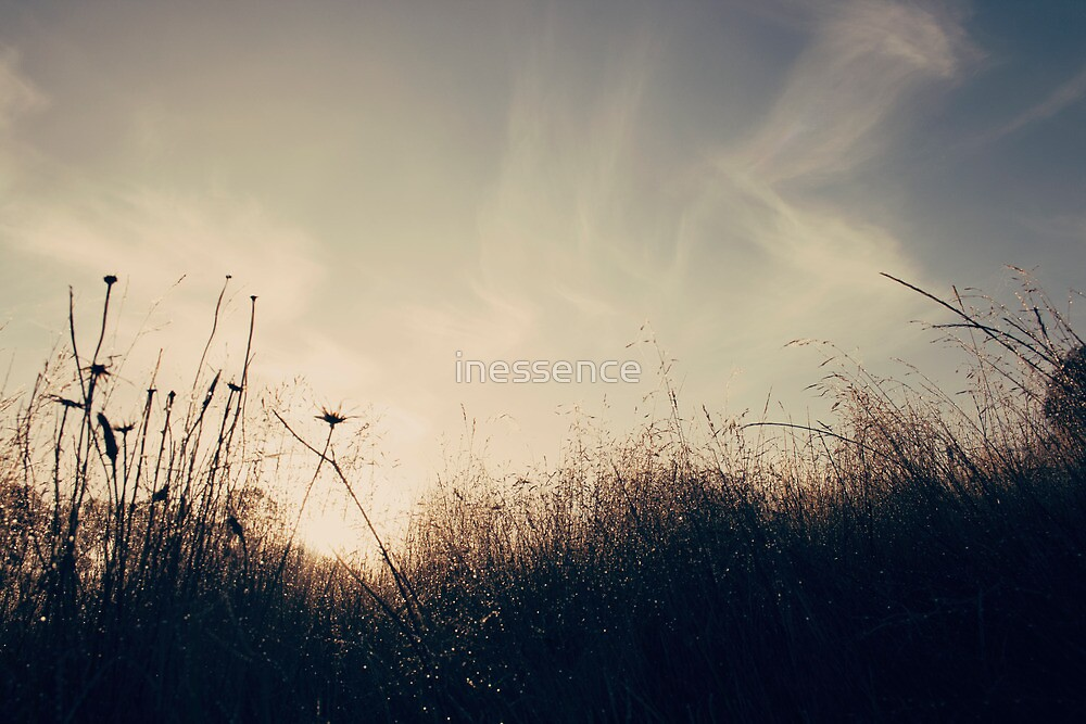 . carefree summer morning . by inessence