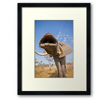Trunk call Framed Print