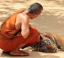 Monk with Tiger by Tamara Brown