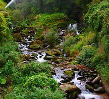 Glen Lyn Gorge by Paul Bettison