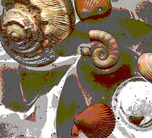 Photoshop Shells by Robert Phillips