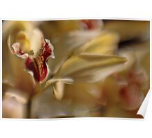 Orchid Impressions Poster