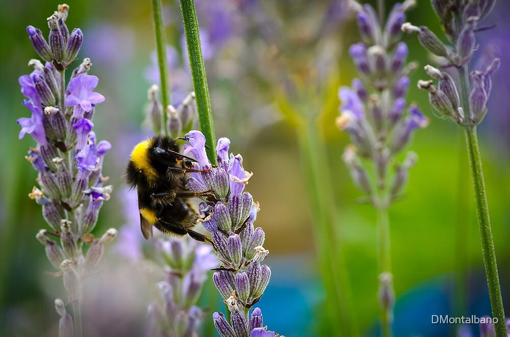 Harvesting Lavender by DMontalbano