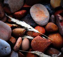pebbles by Fiona Gardner