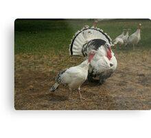 White Turkeys Metal Print