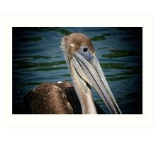 Brown Pelican Profile Art Print