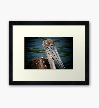 Brown Pelican Profile Framed Print