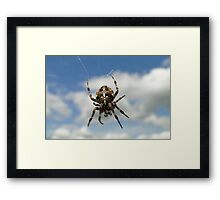 Patiently Hanging Around Framed Print