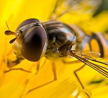 Hoverfly Up Close by Keld Bach