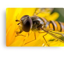 Hoverfly Up Close Canvas Print
