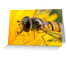 Hoverfly Up Close Greeting Card