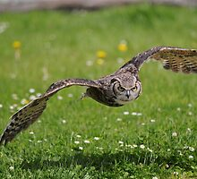 Canadian Great Horned Owl 'Owls' by Simone Kelly