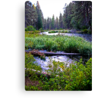spring fed Canvas Print
