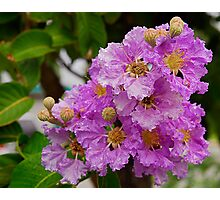 Lilac - with Raindrops Photographic Print