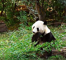 Panda Munching Bamboo by Maria Martinez