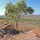 Single tree in Kimberley wilderness by Margaret  Hyde