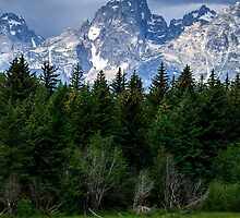 Mountain vs. Meadow by PDGFilm