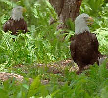 Crying Out - Bald Eagle Couple by Maria Martinez