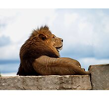 The Regal King Photographic Print