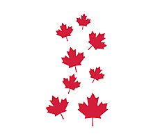 Canada maple leafs Photographic Print
