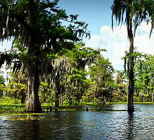 Down on the Bayou - Louisiana, USA by Sean Farrow