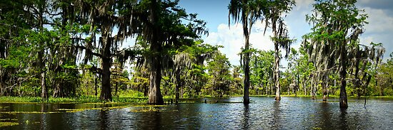 Down on the Bayou - Louisiana, USA by Sean Farrow
