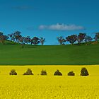 Canola Crop 2 by D-GaP