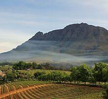 Stellenbosch skyline by Dan MacKenzie