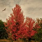Happy Autumn by KatMagic Photography