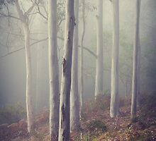 trees in the mist by ozzzywoman
