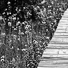 Boardwalk by Roxanne Persson