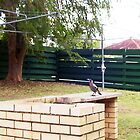 Magpie On The Barbeque by robertemerald