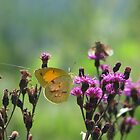 Butterfly in the Smokies by JeffeeArt4u
