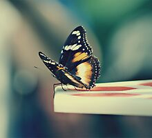 Butterfly by Crystal Potter