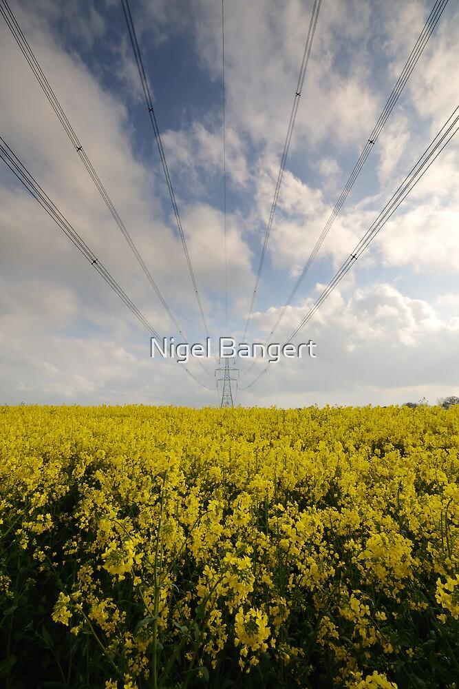 Rapeseed Pylons by Nigel Bangert