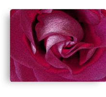"An ""Inky"" Rose Canvas Print"