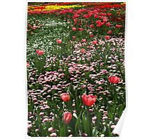 The Flowers of Floriade 2012 - Canberra, Australia Poster