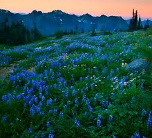 Tatoosh Sunrise by DawsonImages