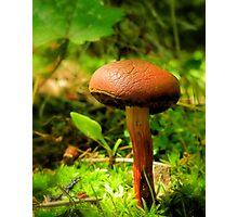 Little Brownie Mushroom Photographic Print
