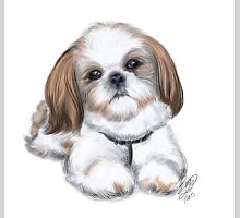 illustration of shih tzu by Basu Kshitiz by basukshitiz