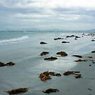 Seaweed Pot Boil Point Flinders Island by Andrew  Makowiecki