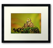 spider, dew and butterfly mating Framed Print